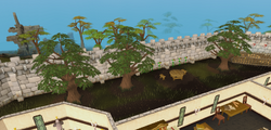 Varrock Palace yew trees