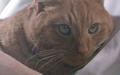 410px-Jones the cat.png