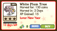 White Plum Tree Market Info