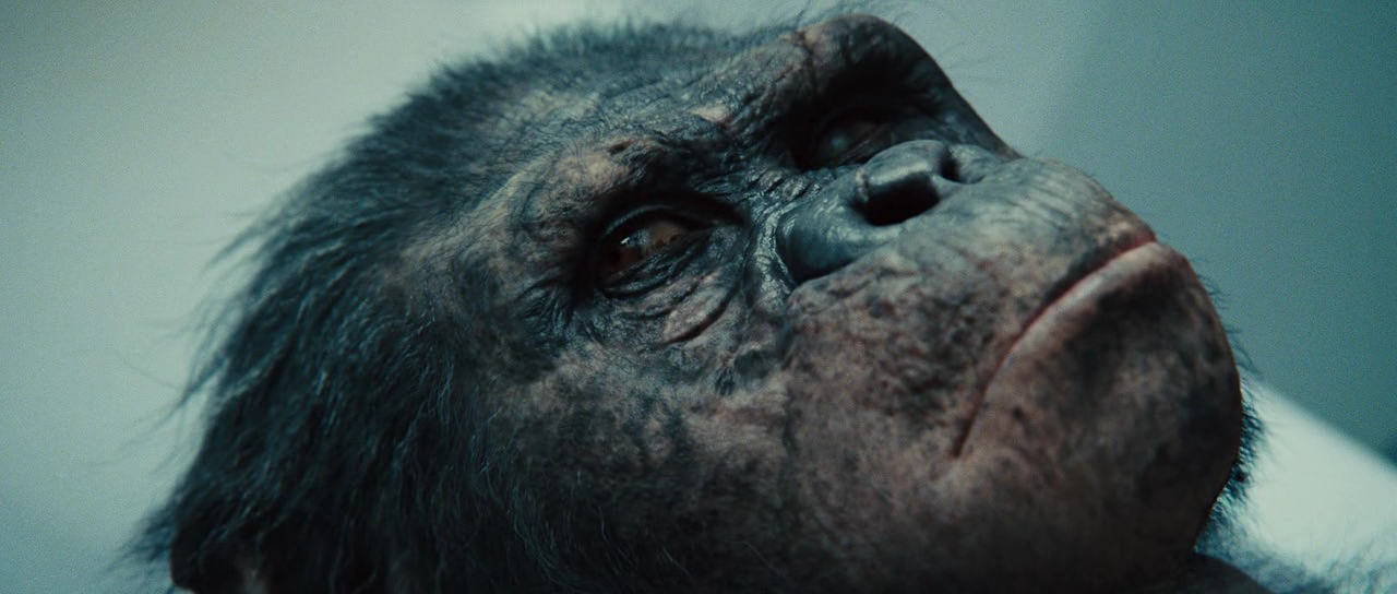 Koba - Planet of the Apes: The Sacred Scrolls