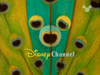 DisneyPeacock1999