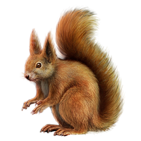 Huge item red squirrel 01