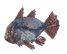 SkyFish.png