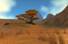 Barrens at Day