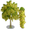 Goldenchain Tree-icon