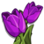 Purple Tulip-icon