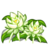 Night Cereus-icon