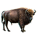 Item europeanbison 01
