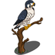 Peregrine Falcon-icon