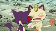 EP706 Meowth enamorado