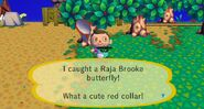 Raja Brooke Butterfly Caught In CF