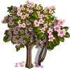 Giant Summer Cherry Tree-icon