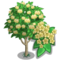 Japanese Angelica Tree-icon