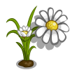 White Daisy-icon