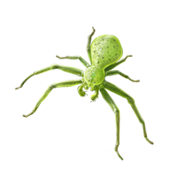 Huge item greencrabspider 01