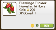 Flamingo Flower Market Info (June 2012)