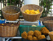 Sea sponges for sale