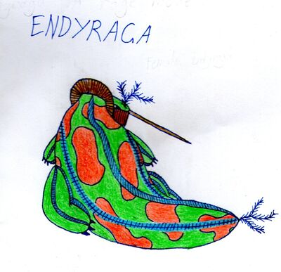 Endyraga