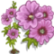 Full Bloom Pink Hollyhock-icon