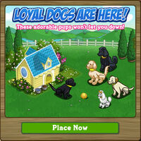 Sunshine Doghouse Loading Screen