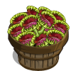Venus Fly Trap Bushel-icon