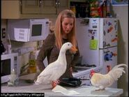 Phoebe-Buffay-Friends-tv-characters-5385946-768-576