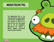 Moustache Pig Toy Care
