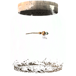 TESV Dragonfly In A Jar Crop