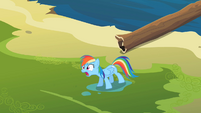 Rainbow Dash &#39;and she&#39;s magic&#39; S2E08