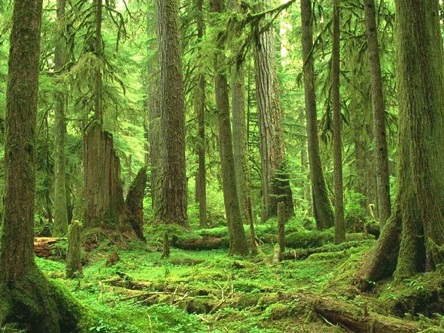 The Hawkclan Territroy Thunderclan_Forest