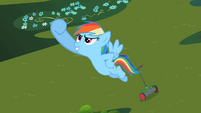 Rainbow Dash&#39;s Victory S2E8