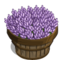 Licorice Plant Bushel-icon