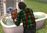 Jen washing one of his pet dogs