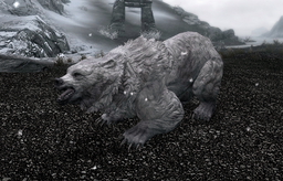 Snow Bear (Skyrim)