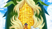BB Corn 1