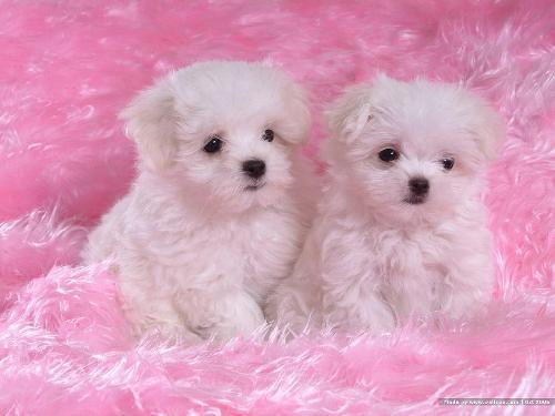 Bajar fotos de perritos tiernos - Imagui