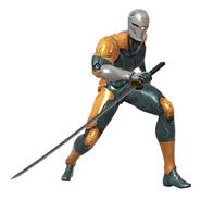 Gray Fox
