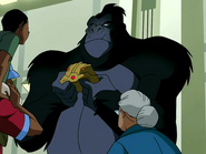 Grodd display