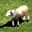 Sheep-icon-aoe2