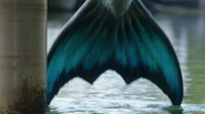 Zac&#39;s Tail