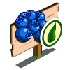 Organic Blueberry Mastery Sign-icon