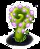 Caracol Roxo Planta