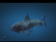 180px-Shark_attacking.png