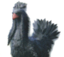Black Chocobo (Final Fantasy XIII-2)