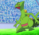 Sceptile Asha