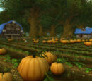Brackwell Pumpkin Patch
