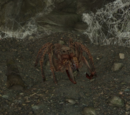 Dark Brotherhood Pets (Skyrim)