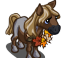 Harvest Pony Foal