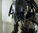 Predalien (Earth)