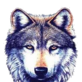 82px-0%2C194%2C0%2C194-Wolf.png